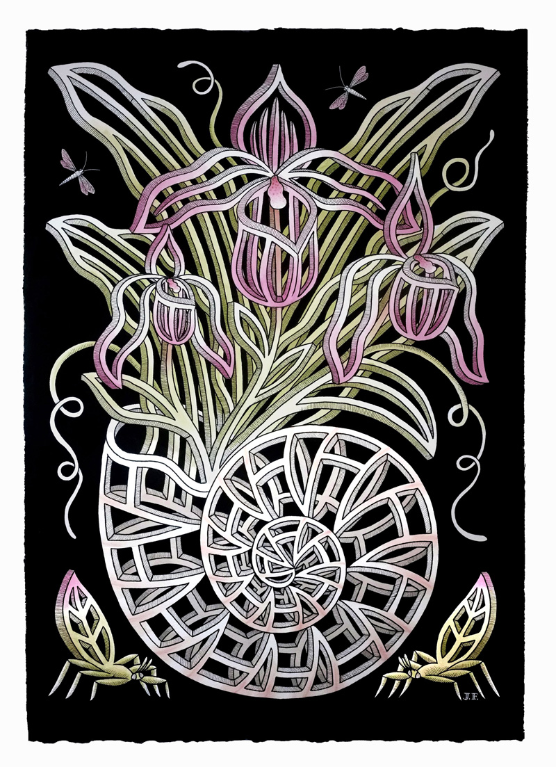 Jayde Fish, Nautilina Orchid, 2018, ink on paper, 104×75 cm