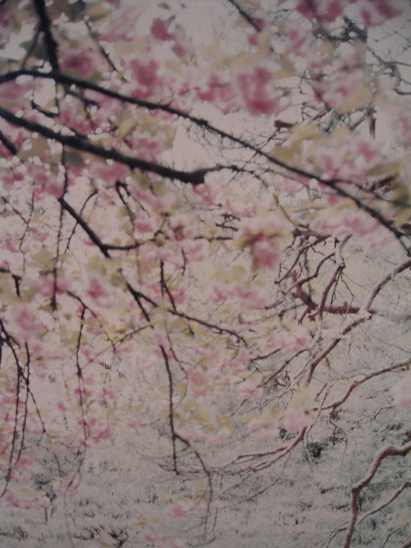 Thomas Flechtner, Sakura, 2003, cm 120x170 n.1