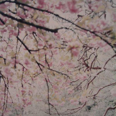 Sakura, 2003, Cm 120×170 N