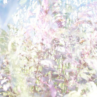T. Flechtner, Blumen, 2004 05, C Print, Cm 170x120 5